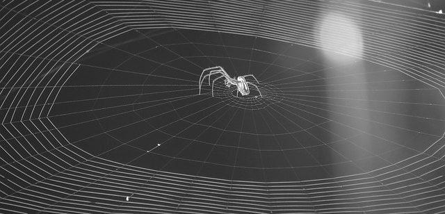 soñar con arañas pequeñas soñar con arañas conoce lo que significa desde los distintos aspe i214961