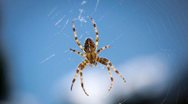 soñar con arañas soñar con arañas conoce lo que significa desde los distintos aspe i214961