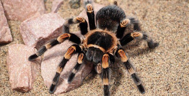 soñar con arañas vs la realidad soñar con arañas conoce lo que significa desde los distintos aspe i214961