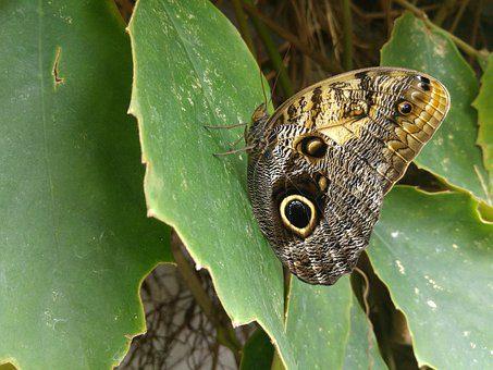 butterfly 3110160 340 anna bonus kingsford la evolucion del ego 51 i215871