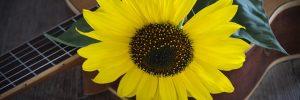 flower 2710508 640 la musica el increible regalo del universo para la sanacion de la i216339