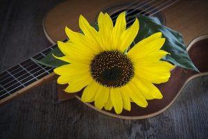 La Música, regalo del universo para la sanar a la humanidad.