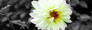 flower 4346270 640 mensaje del colectivo de guias via caroline oceana ryan 20 de dici i216660