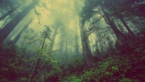 forest 931706 640 1 el ultimo regalo del maestro jesus amor del creador canalizado por i216159