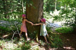 Abrazar árboles, un poder sanador a nuestro alcance