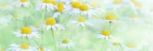 nature 3054797 640 las 9 plantas maravillosas que no deben faltar en nuestro hogar i215830
