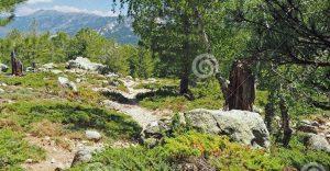 rocas 2 p3 caminando entre santos mesin por fin llega a casa i216217