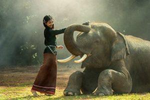 Cómo encontrar e invocar a tu animal espiritual