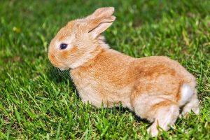 rabbit 139309 1920 horoscopo chino 2020 descubre que te depara tu futuro este ao i217570