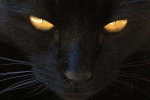 ¿Cuál es el Significado de Soñar con un Gato Negro? Conoce de cerca este extraordinario Simbolismo, ¡te encantará!