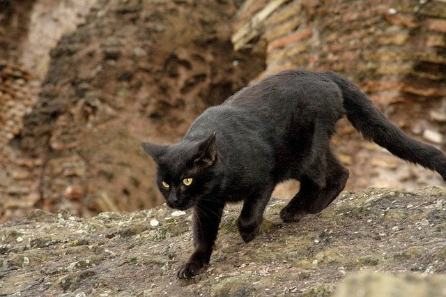 soñar con un gato cual es el significado de soar con un gato negro conoce de cerca i217964