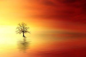 La Presencia pura y la profundización de las experiencias con el Alma Sagrada.