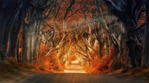 the dark hedges 4094148 640 musica celta 5 versiones que elevaran tu alma i217131
