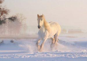white horse 3010129 1920 horoscopo chino 2020 descubre que te depara tu futuro este ao i217570