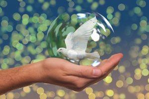 ¿Qué es la paz para ti?, 14 de Febrero de 2020