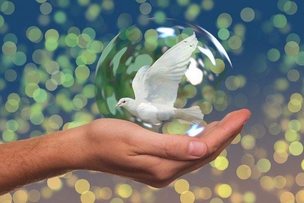 peace dove 2489589 640 que es la paz para ti 14 de febrero de 2020 i219229