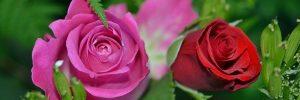 que es la belleza en la moral que es la belleza tu eres bella tu eres bello i218030