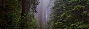 redwood national park 1587301 1920 comunicacion telepatica con nosotros un mensaje del consejo arcturi i218454