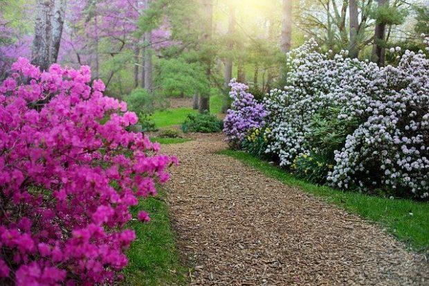 spring 3404749 640 el plan de tu alma en la tierra un mensaje de la madre maria i part i218890