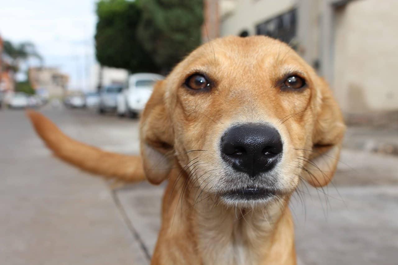 altruismo con los animales motivacion 14 pesimismo y esperanza i220506