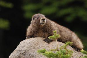 Yeshua: La marmota y el posicionamiento global. 1ra Parte