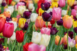 Plantando el jardín de tu alma. Canalización del Arcángel Gabriel