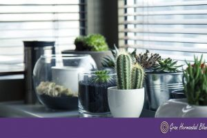 5 plantas que deberías tener en casa.