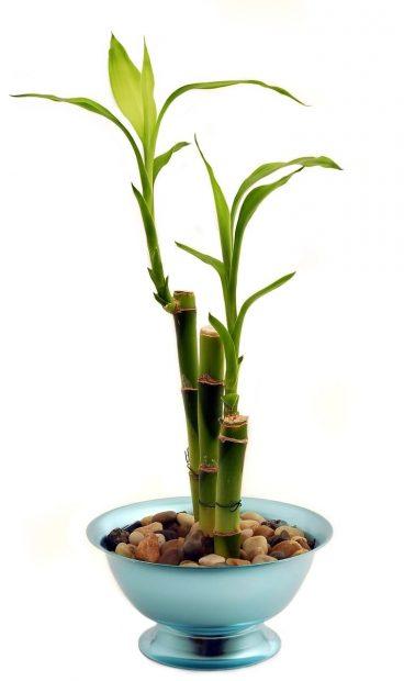 bambu plantas que deberias tener en casa i223093