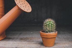 cactus 4 plantas que deberias tener en tu casa i223093
