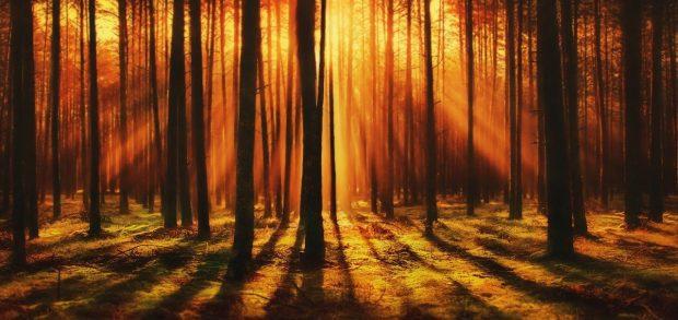 forest 4412721 1280 judas iscariote rayos de amor un mensaje para los tiempos dificiles i219087
