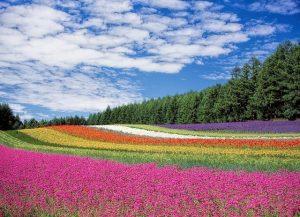 flower field 250016 640 el amor de la tierra por pamela kribbe i224648