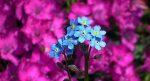 flowers 3627949 1280 el consejo arcturiano via marilyn raffaele 17 de mayo del 2020 i224642