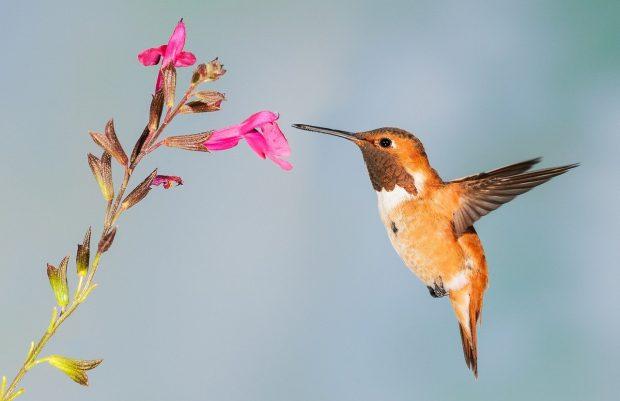 hummingbird 5255827 1280 sonando inter dimensionalmente i228094