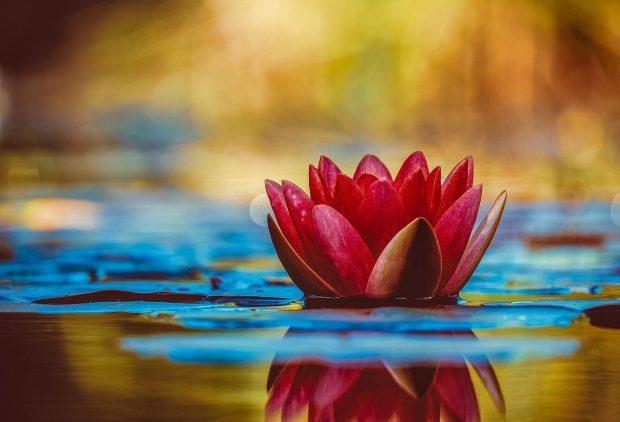 water lily 3784022 1280 tiempos tormentosos el consejo de la luz 30 10 2020 i229012