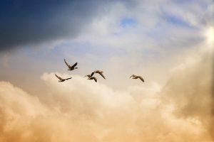 birds 5159711 640 saint germain un nuevo mundo esta surgiendo i229730