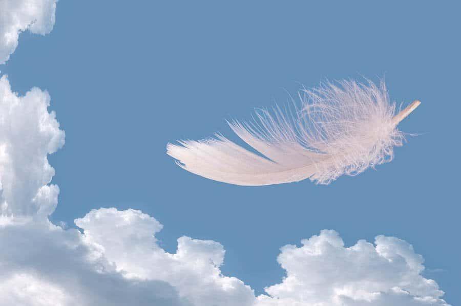 piume para fusionarte con tu angel i230322