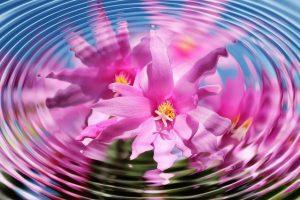 flower 110783 640 los proximos cambios en la vida humana un mensaje del observador i233246