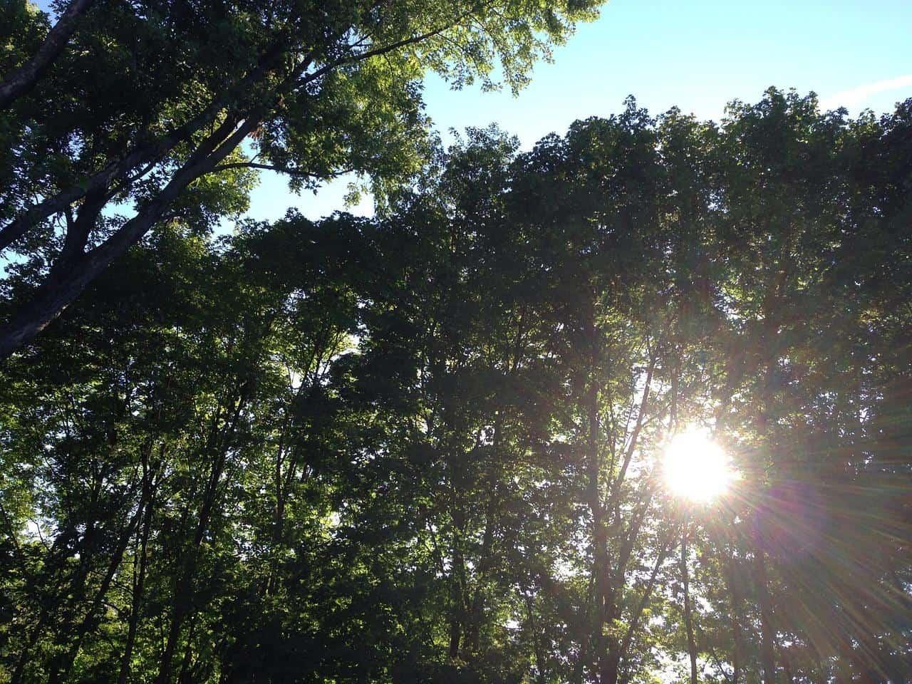light 718438 1280 1 el proceso del despertar colectivo y la soberania espiritual por natal i233340
