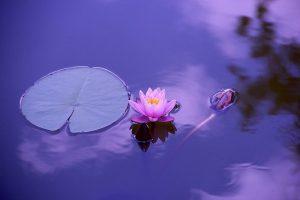 lotus 1205631 640 reconociendo el flujo divino en 2021 un mensaje de lord melquisedec i231096
