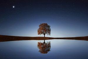 tree 838667 640 reconociendo el flujo divino en 2021 un mensaje de lord melquisedec i231096