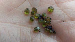 olivino del volcan kilauea olivino el mineral que mas se encuentra en la corteza terrestre y sus i235596
