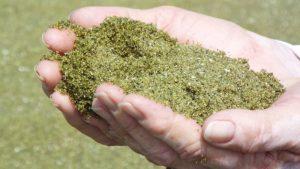 olivino hawai olivino el mineral que mas se encuentra en la corteza terrestre y sus i235596