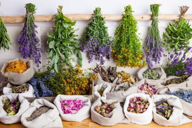 plantes medicinals 1170x780 1 agua de carmen melisana i235551