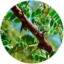 una de gato arbol hb3 una de gato una planta con propiedades y beneficios insolitos para la i235005