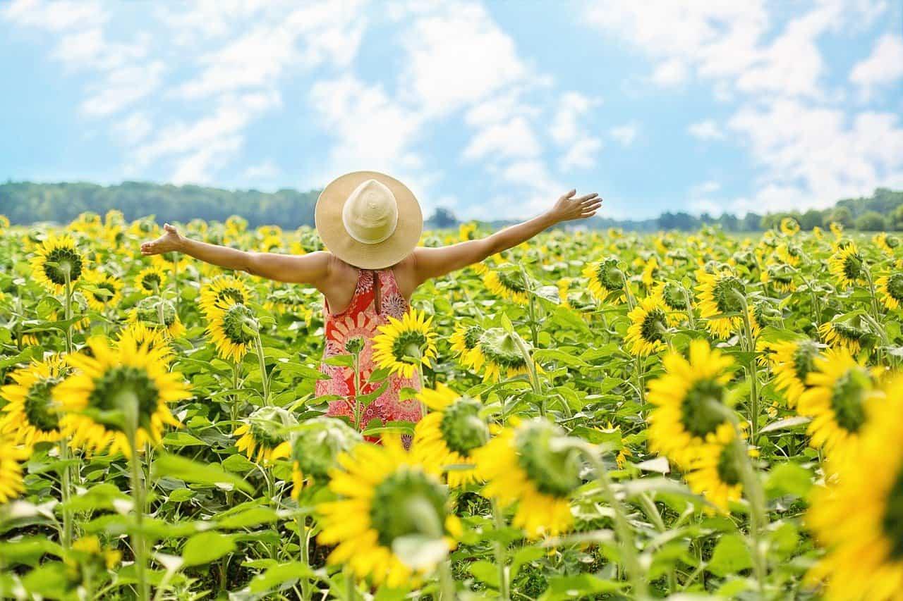 sunflowers 3640938 1280 la alegria que hay en nuestras vidas un mensaje de saul i236144