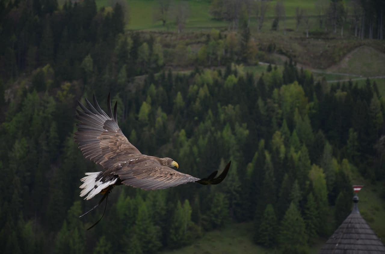 eagle 339128 1280 el crecimiento de la vida un mensaje del arcangel rafael i236784