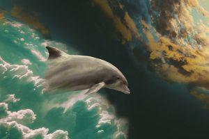 dolphin 2562115 640 desatar la cuerda un mensaje de los angeles a traves de ann albers i239215