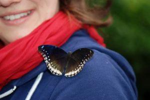 nature outdoor wing wildlife wild insect 1152180 pxhere com la danza del impulso y la rendicion un mensaje de los angeles i238932